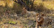 Zambian Government to spend K400 million to conserve wildlife