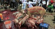 Kenya's Nairobi city hit by pig protest over MPs Pay