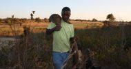 Today's Photo: Hunting Spree