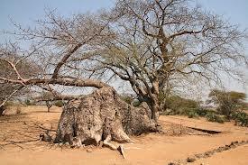 Ingombe Ilede Historical Site