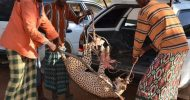 Kenyan villagers out-run 2 cheetahs and capture them alive