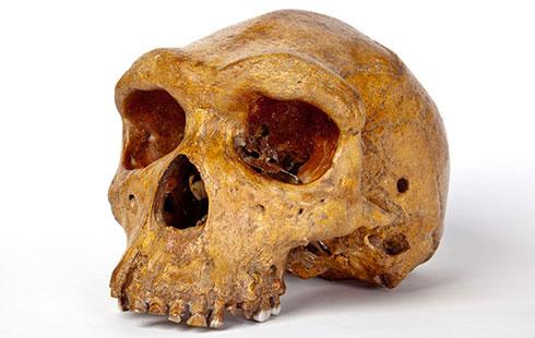 Broken Hill man skull