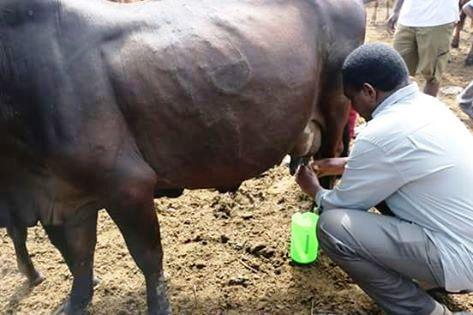 HH milking