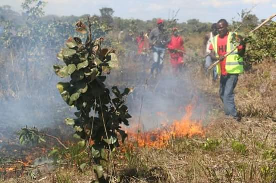 PF Cadres set the bush near HH was to land from on fire
