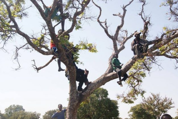 Supporters climb trees to catch a glimpse of HH