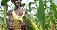 UN, Green Climate Fund to support close to 1 million farmers in Zambia