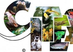 CITES urged to move its tri-annual meeting out of Sri Lanka