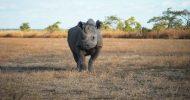 African wildlife politics book wins international recognition