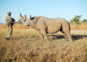 CNN's Inside Africa investigates the conservation of Zambia's Black Rhinos