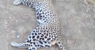 Teachers at Makoye School living in fear, Leopards on the loose